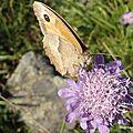 Papillon de jour (près de Chambon-sur-Lac, août 2013)