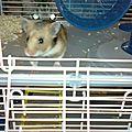 Yeux de chat face à hamster