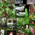 L'amazonie, nature, marche et culture