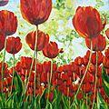 tulipes780