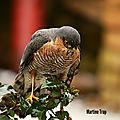aviary-image-1518385740291