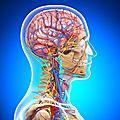 L'activité psychique du cerveau