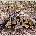 Un petit tour au bois...