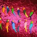 ribambelle de perroquets porte couteaux