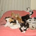 2008 04 19 Les 9 petits chatons