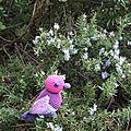 L'hirondelle ne fait pas le printemps sc n°166