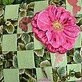 livre textile pivoine juin1 (1)