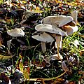 champignon-05927 (1)