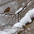 Oiseaux en fin d'hiver