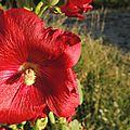 Flore et couleur