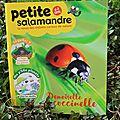 La petite salamandre sur la coccinelle - la revue des petits curieux de la nature