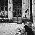 Janine-Niepce-chat-paris-photos1