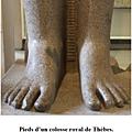 Anatomie humaine - le membre inférieur - iv- atlas (3)