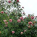 5- mignonne allons voir si la rose.