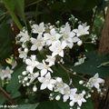 Délicates fleurettes blanches