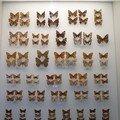 Musée des sciences naturelles dans la vallée d'aoste