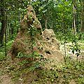 P1150430 termitière haut 1,50 m