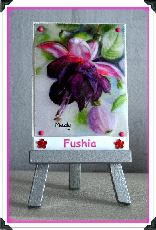 495 Fushia pour Tortue