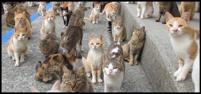 chats mont saint michel