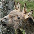 2008 04 16 Les deux ânes