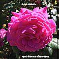 Citation : il reste toujours un peu de parfum à la main qui donne des roses (confucius)