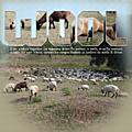 <b>Wool</b> Moutons à Cuffy Cher