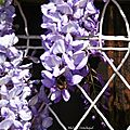 1-Fleurs de Léon 110417