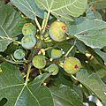 Figues blanches et figues violettes pour mon deuxième anniblog