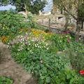 2008 08 25 Mon jardin en fleur