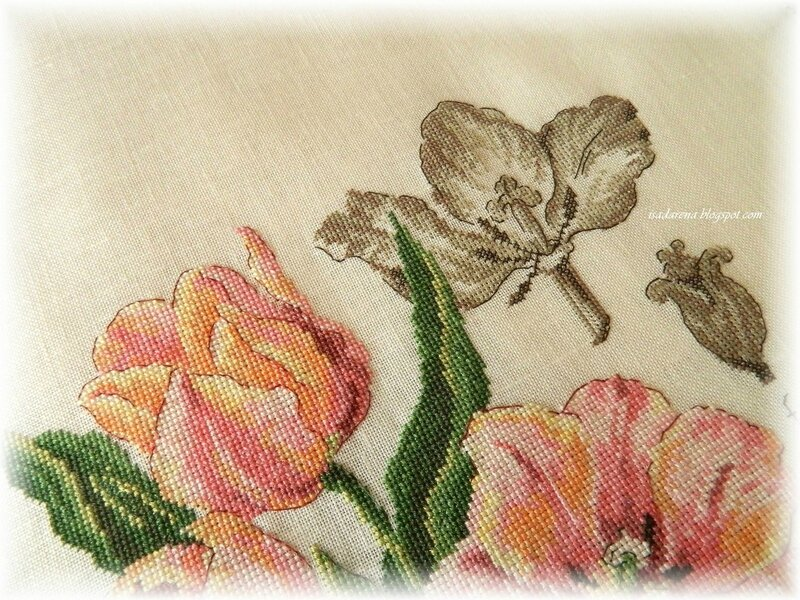 tulipe5