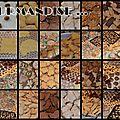 photos biscuits de noël chez la math 2012