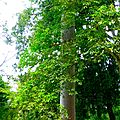 Jardin Botanique - Kandy
