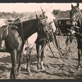 SOLOGNE 1920 Equipage de Cheverny Archives Maul-on 010