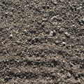 faible densité de graines après le 1er semis