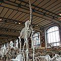 museum girafe