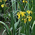 20/05/15 : quelques fleurs charentaises