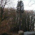 Evolution du pylône arbre et de son environnement