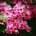 Roses jardin secret_13 22 06_5543