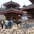 Durbar Square - Vache et pigeons