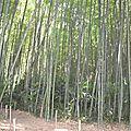 bambouseraie (13)