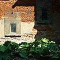 Carnets de moisson: la confiture de rhubarbe: