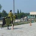Jeux équestres manchots 2013 (200)
