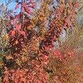 automne023