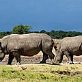 rhinoceros617514089910_n