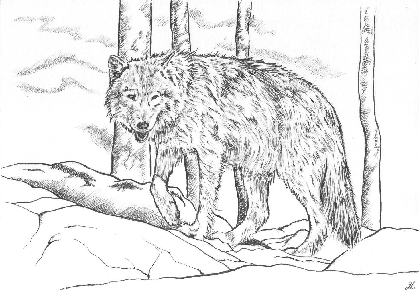 Coloriage loup coloriage artistique loup dessin feutre - Image loup dessin ...