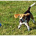 Bien-être : Les <b>jouets</b> pour chiens