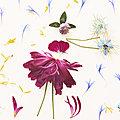 Pétales de fleurs et bouquet de coquelicots ...