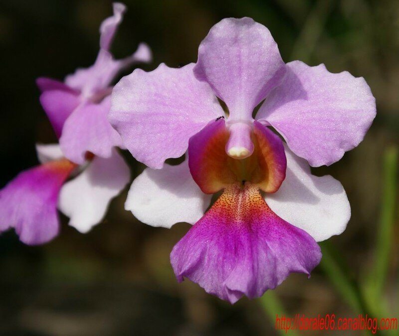 orchid_20