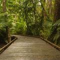 Marche dans la <b>forêt</b> <b>équatoriale</b>