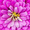 coeur-fleur14-06
